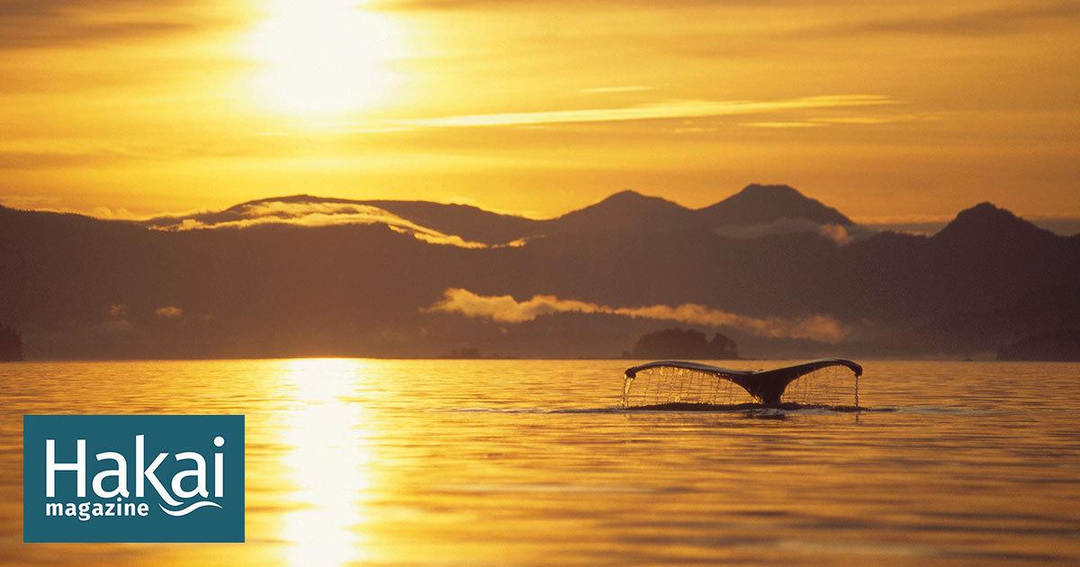 La ballena que cenaba sola