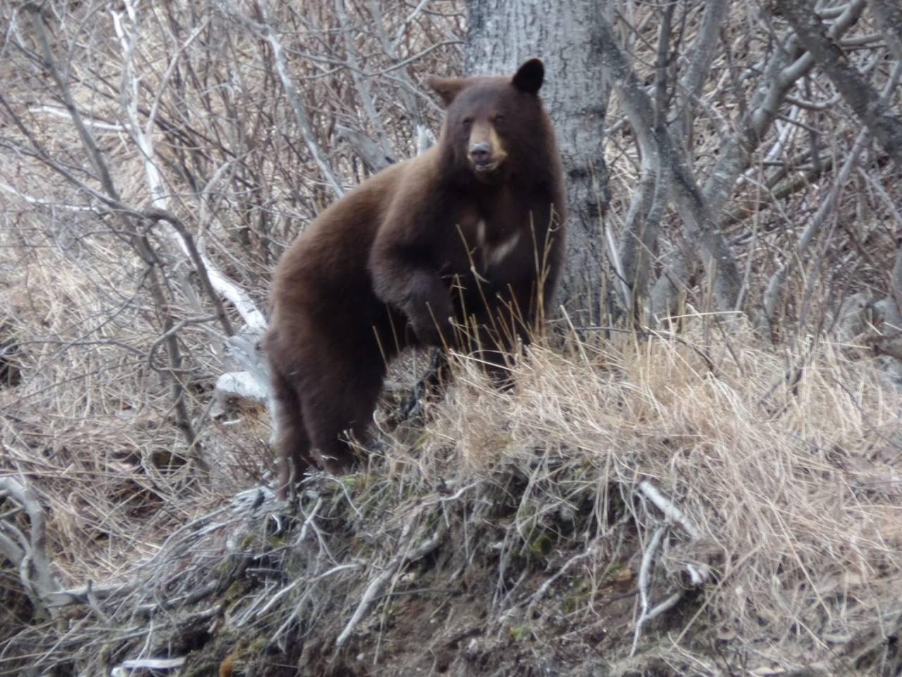 Los problemas de acabar con el confinamiento en Alaska